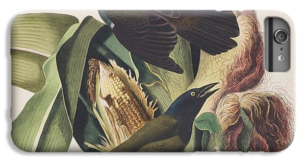 Common Crow IPhone 6 Plus Case by John James Audubon