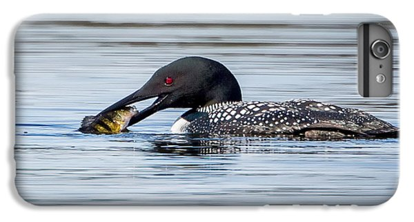 Common Loon Square IPhone 6 Plus Case by Bill Wakeley