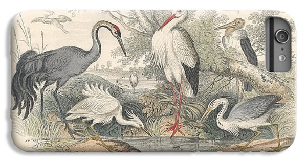 Cranes IPhone 6 Plus Case by Oliver Goldsmith