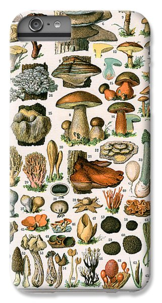 Decorative Print Of Champignons By Demoulin IPhone 6 Plus Case by American School