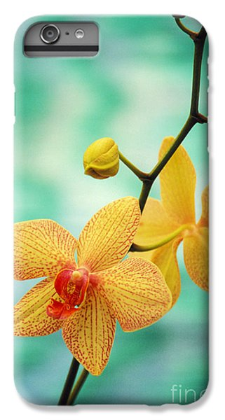 Dendrobium IPhone 6 Plus Case by Allan Seiden - Printscapes