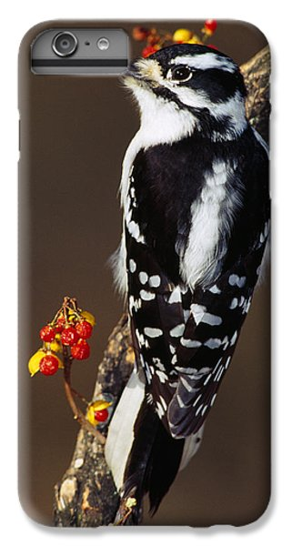Downy Woodpecker On Tree Branch IPhone 6 Plus Case by Panoramic Images