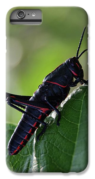 Eastern Lubber Grasshopper IPhone 6 Plus Case by Richard Rizzo