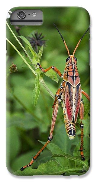 Eastern Lubber Grasshopper  IPhone 6 Plus Case by Saija  Lehtonen