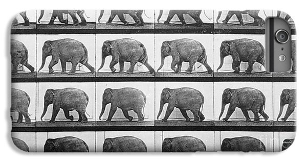 Elephant Walking IPhone 6 Plus Case by Eadweard Muybridge
