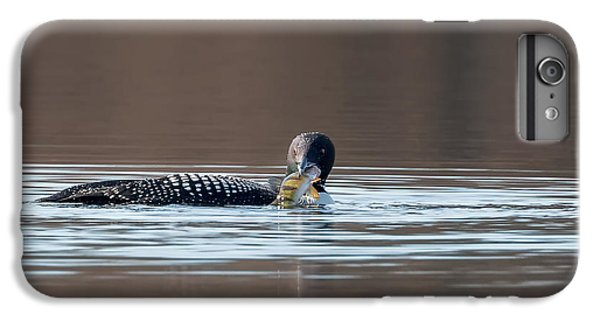 Feeding Common Loon IPhone 6 Plus Case by Bill Wakeley