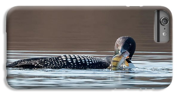 Feeding Common Loon Square IPhone 6 Plus Case by Bill Wakeley