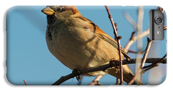 Female House Sparrow IPhone 6 Plus Case by Mike Dawson