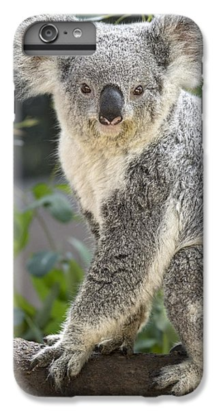 Female Koala IPhone 6 Plus Case by Jamie Pham