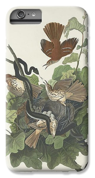 Ferruginous Thrush IPhone 6 Plus Case by John James Audubon