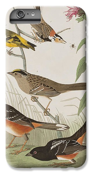 Finches IPhone 6 Plus Case by John James Audubon