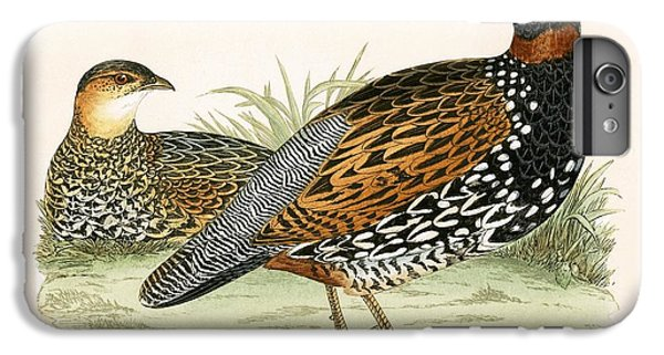 Francolin IPhone 6 Plus Case by English School