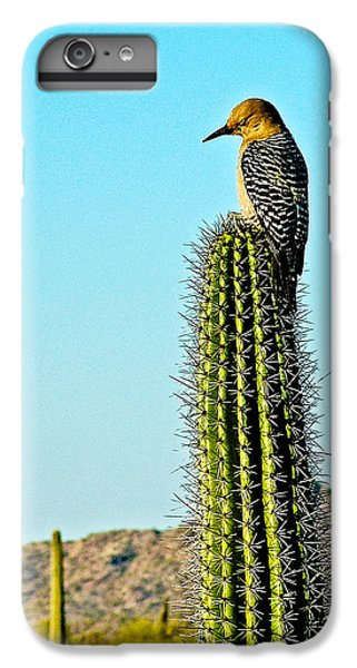 Gila Woodpecker On Saguaro In Organ Pipe Cactus National Monument-arizona IPhone 6 Plus Case by Ruth Hager