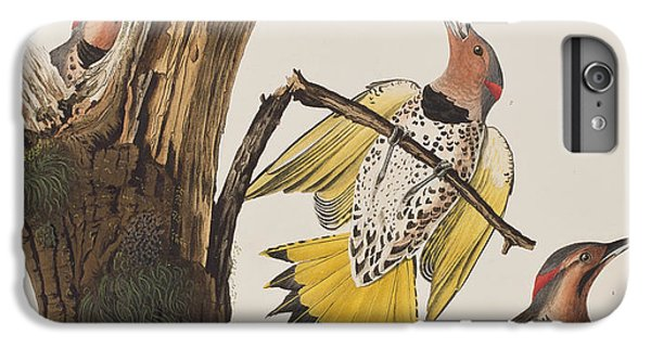 Golden-winged Woodpecker IPhone 6 Plus Case by John James Audubon