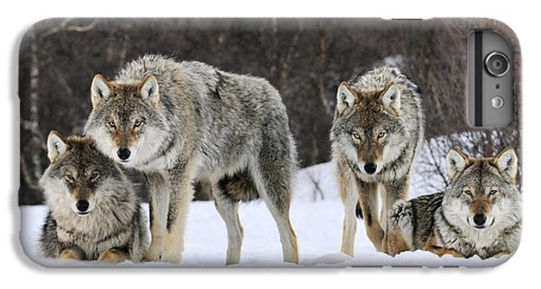 Gray Wolves Norway IPhone 6 Plus Case by Jasper Doest