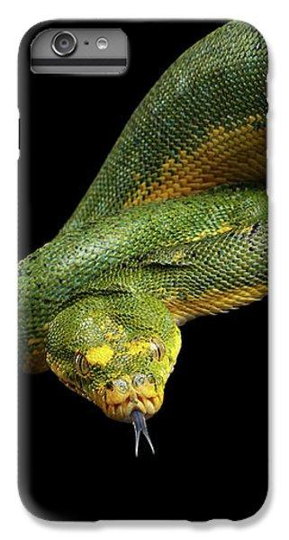 Green Tree Python. Morelia Viridis. Isolated Black Background IPhone 6 Plus Case by Sergey Taran