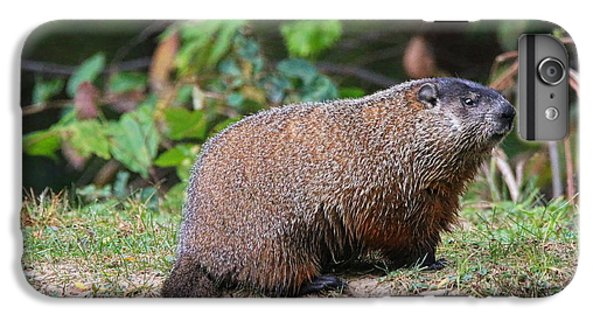 Groundhog  0590 IPhone 6 Plus Case by Jack Schultz