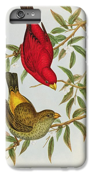 Haematospiza Sipahi IPhone 6 Plus Case by John Gould