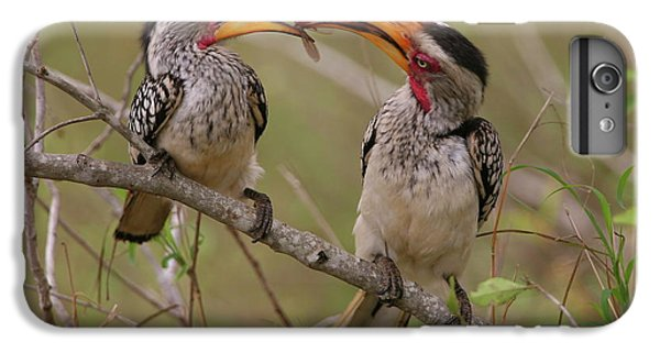 Hornbill Love IPhone 6 Plus Case by Bruce J Robinson