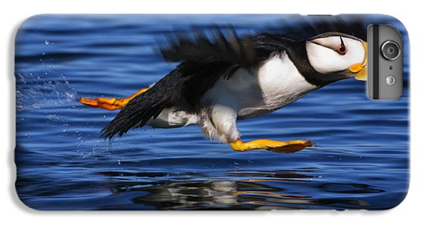 Horned Puffin  Fratercula Corniculata IPhone 6 Plus Case by Marion Owen