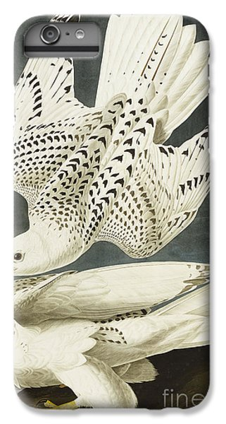 Iceland Or Jer Falcon IPhone 6 Plus Case by John James Audubon