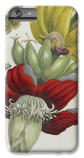 Inflorescence Of Banana, 1705 IPhone 6 Plus Case by Maria Sibylla Graff Merian