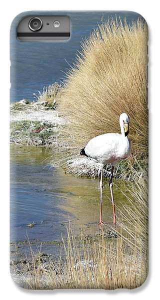 Juvenile Flamingo No. 64 IPhone 6 Plus Case by Sandy Taylor