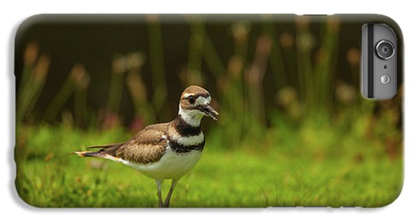 Killdeer IPhone 6 Plus Case by Karol Livote