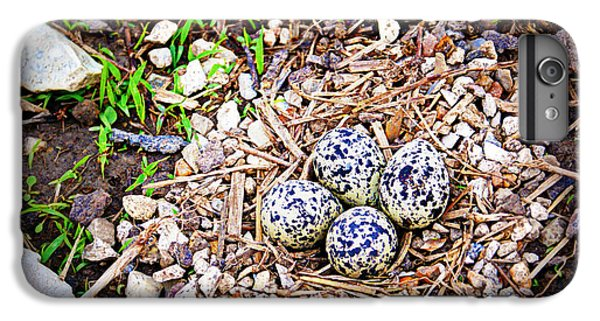Killdeer Nest IPhone 6 Plus Case by Cricket Hackmann