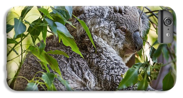 Koala Joey IPhone 6 Plus Case by Jamie Pham