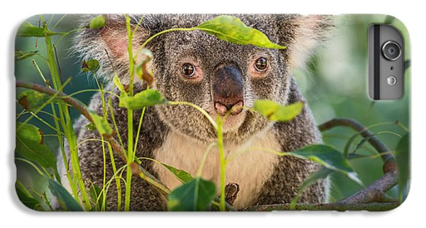 Koala Leaves IPhone 6 Plus Case by Jamie Pham