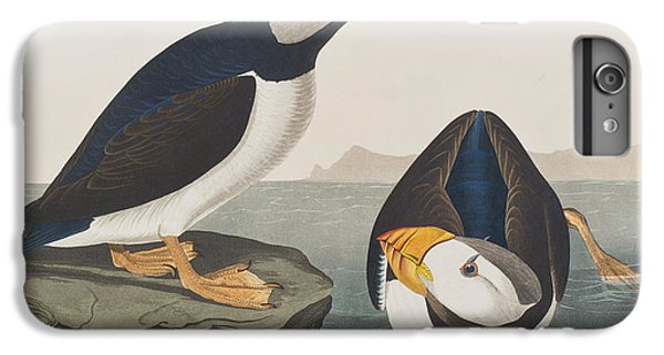 Large Billed Puffin IPhone 6 Plus Case by John James Audubon