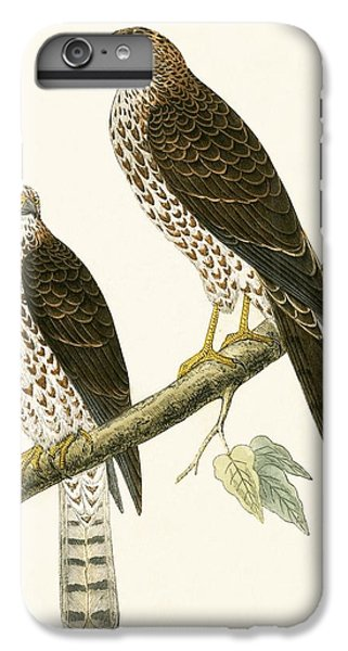 Levant Sparrow Hawk IPhone 6 Plus Case by English School