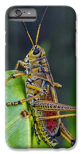 Lubber Grasshopper IPhone 6 Plus Case by Richard Rizzo