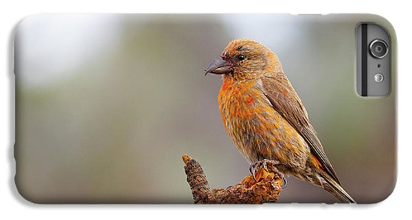 Male Red Crossbill IPhone 6 Plus Case by Doug Lloyd