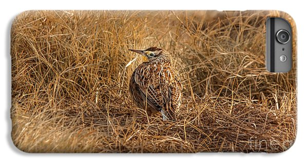 Meadowlark Hiding In Grass IPhone 6 Plus Case by Robert Frederick