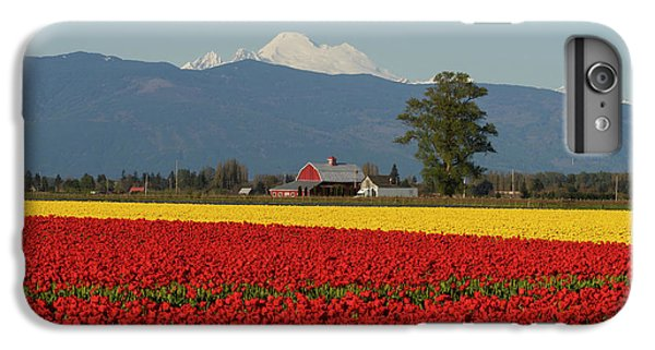 Mount Baker Skagit Valley Tulip Festival Barn IPhone 6 Plus Case by Mike Reid