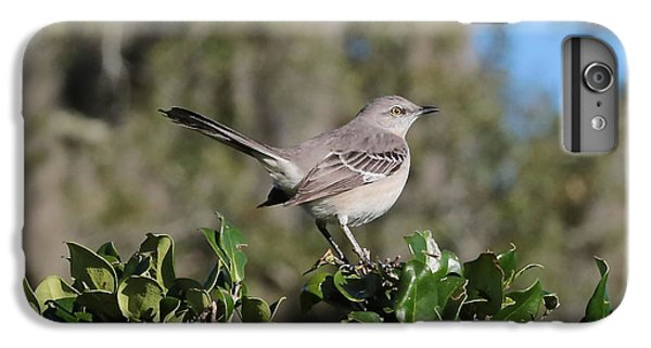 Northern Mockingbird IPhone 6 Plus Case by Carol Groenen