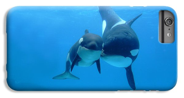 Orca Orcinus Orca Mother And Newborn IPhone 6 Plus Case by Hiroya Minakuchi