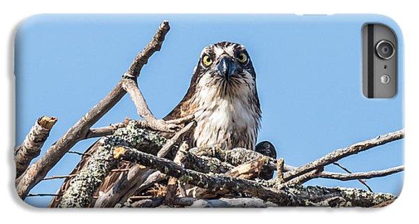 Osprey Eyes IPhone 6 Plus Case by Paul Freidlund