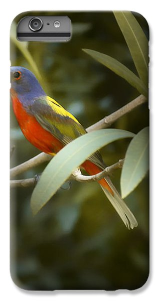 Painted Bunting Male IPhone 6 Plus Case by Phill Doherty
