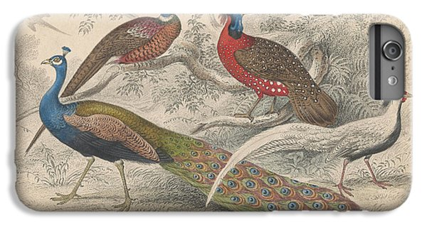 Peacocks IPhone 6 Plus Case by Oliver Goldsmith
