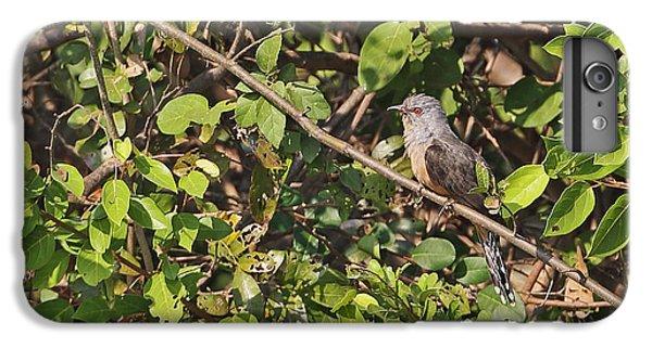 Plaintive Cuckoo IPhone 6 Plus Case by Neil Bowman/FLPA