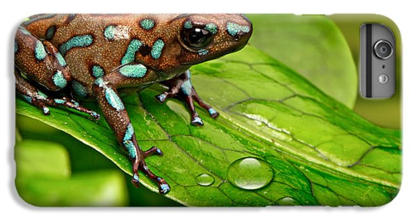 poison art frog Panama IPhone 6 Plus Case by Dirk Ercken