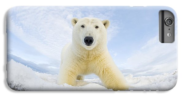 Polar Bear  Ursus Maritimus , Curious IPhone 6 Plus Case by Steven Kazlowski