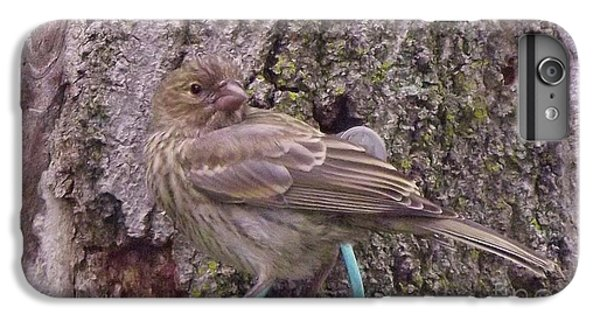 Red Crossbill Female  Indiana  Summer IPhone 6 Plus Case by Rory Cubel