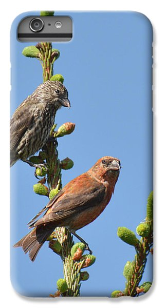 Red Crossbill Pair IPhone 6 Plus Case by Alan Lenk