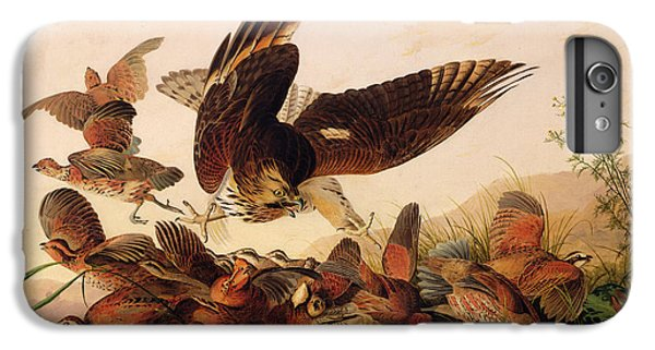 Red Shouldered Hawk Attacking Bobwhite Partridge IPhone 6 Plus Case by John James Audubon