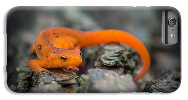 Red Spotted Newt IPhone 6 Plus Case by Chris Bordeleau