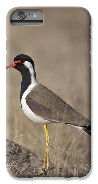 Red-wattled Lapwing IPhone 6 Plus Case by Bernd Rohrschneider/FLPA